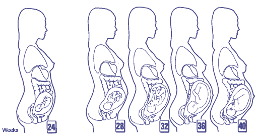 Pregnancy Trimester 2 and 3