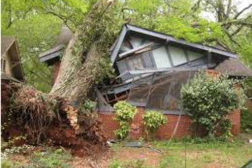 24hr Tree Removal Services
